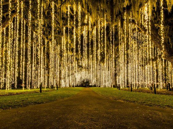 mesés hangulatú logó világítás a fákon